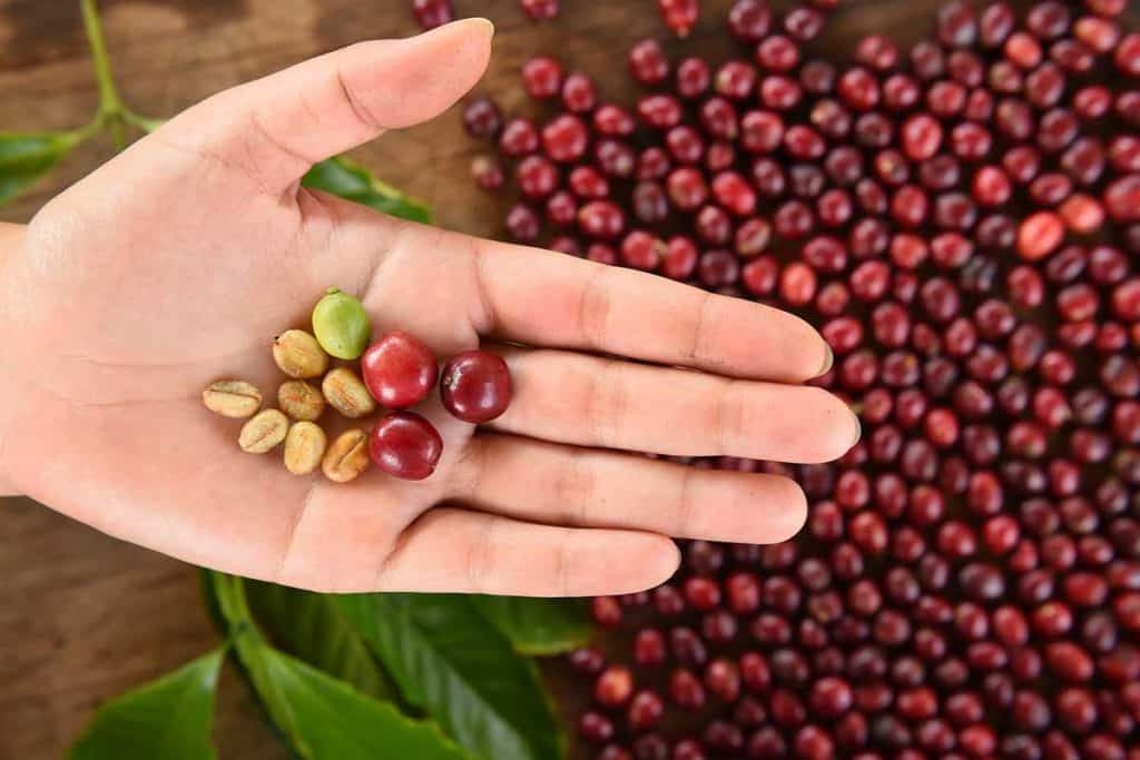 how are coffee beans made